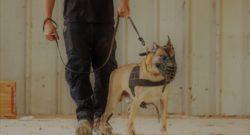 מאבטח בליווי כלב הגנה